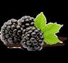 Owoc jeżyny